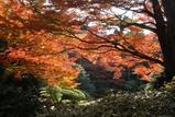 庭園美術館の紅葉