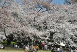 御苑の春 #7