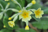 庭の花 #3