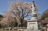津久井の桜 #3