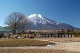 花の都公園の花畑からの富士山