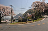 津久井の桜 #7