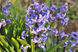 庭の花 #5