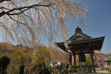 津久井の桜 #4