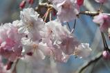 御苑の春 #6