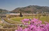 宮ヶ瀬湖桜の季節 #6