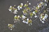 御苑の春 #2