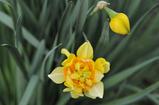 庭の花 #6