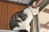見晴台から外を眺める