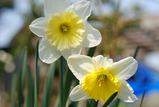 庭の花 #2