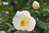 庭の花 #7