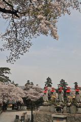 津久井湖周辺の桜 #5