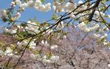 御苑の春 #1