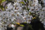 御苑の春 #5