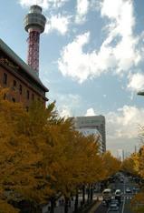 山下公園通りの秋