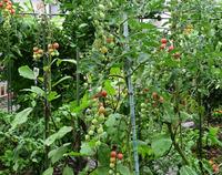 小雨の庭先#2
