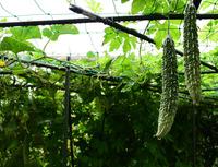 小雨の庭先#1