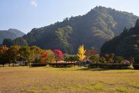 宮ヶ瀬湖畔園地の紅葉#10