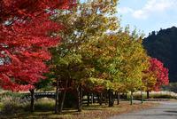宮ヶ瀬湖畔園地の紅葉#2