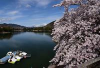 津久井湖水の苑地#8