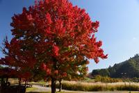 宮ヶ瀬湖畔園地の紅葉#5