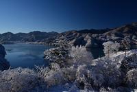 宮ヶ瀬鳥居原の雪景色#10