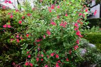 庭先の花#2