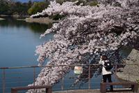津久井湖水の苑地#9