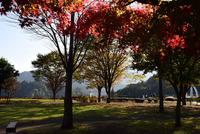 宮ヶ瀬湖鳥居原の紅葉#8
