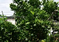 庭先の植物#5