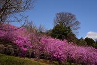 県立あいかわ公園#4