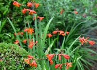 庭先の花#4