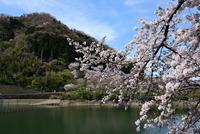 津久井湖水の苑地#7