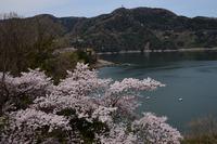 津久井桜の季節#10