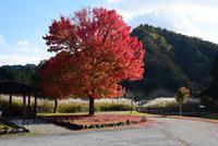 宮ヶ瀬湖畔園地の紅葉#3