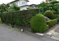 庭先の生垣剪定#2