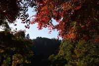 宮ヶ瀬湖畔園地の紅葉#1