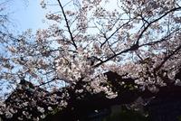 千鳥ヶ淵・靖国神社#8