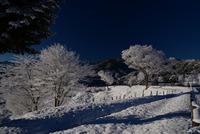 宮ヶ瀬鳥居原の雪景色#9