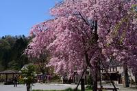 宮ヶ瀬湖畔園地の新緑#6