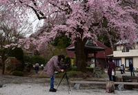 津久井桜の季節#3