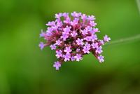 庭先の植物#8