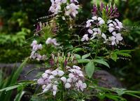 小雨の庭先#3