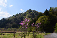 宮ヶ瀬湖畔園地の新緑#1