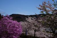 県立あいかわ公園#8