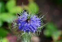 庭先の植物#4