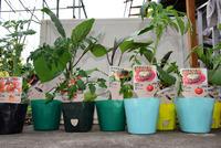庭先菜園#1