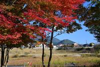 宮ヶ瀬湖畔園地の紅葉#8