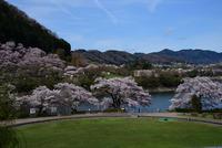 津久井湖水の苑地#2