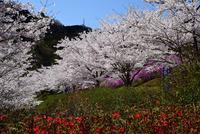 県立あいかわ公園#10